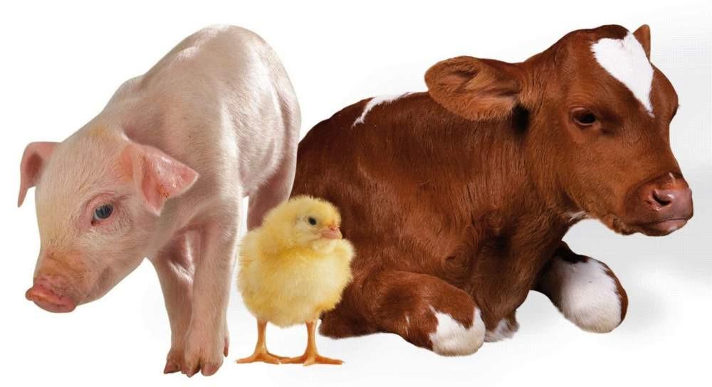 Лечение сельскохозяйственных животных, цена, заказать в Днепре ...