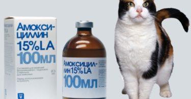 амоксициллин для животных
