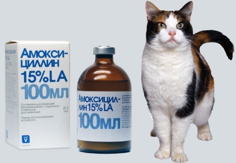 амоксициллин ветеринарный