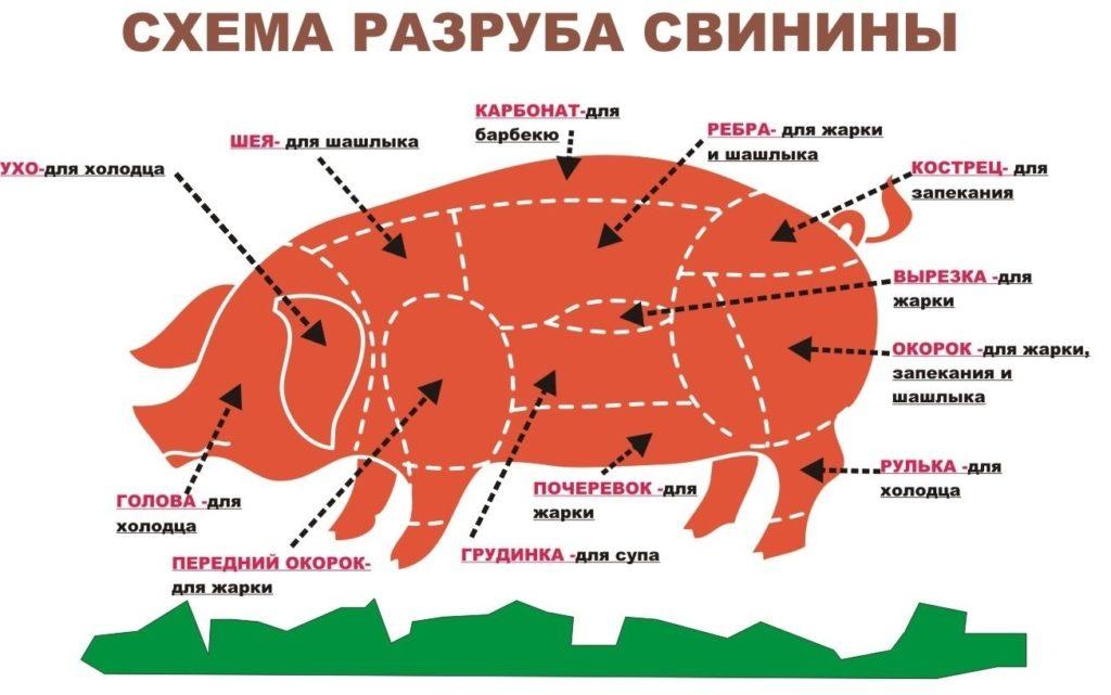 Что лучше лопатка или окорок свиной