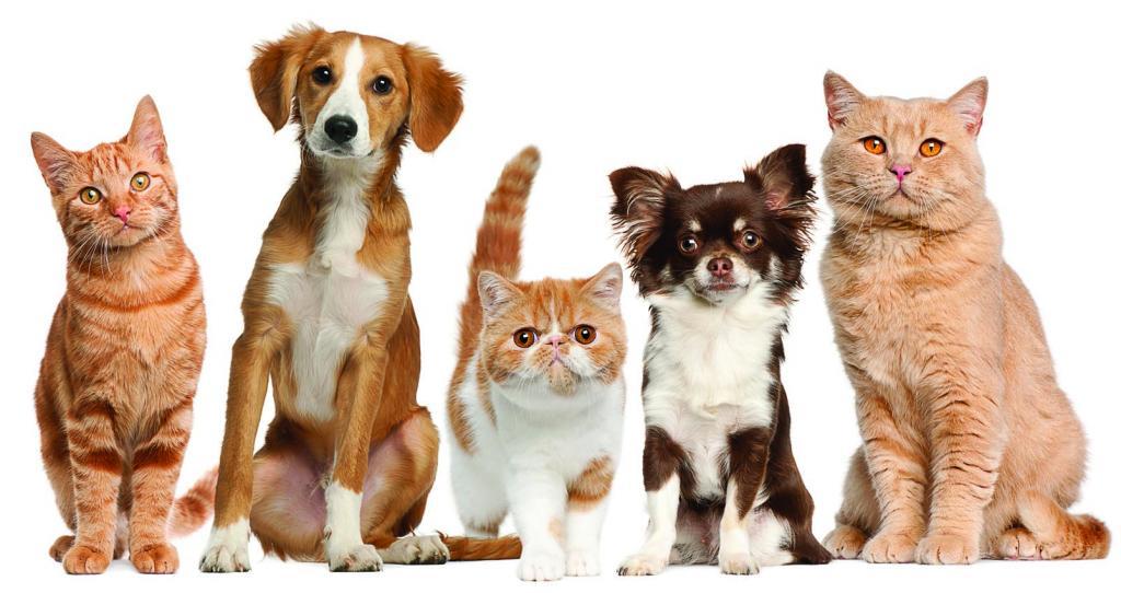 энроксил инструкция по применению в ветеринарии