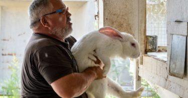 как забивать кролика