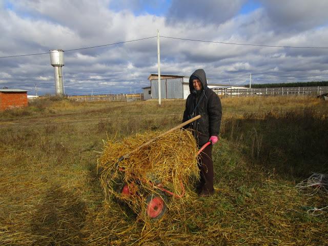 кормушки для коз под сено