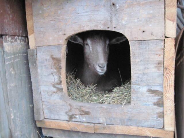 ясли для коз своими руками