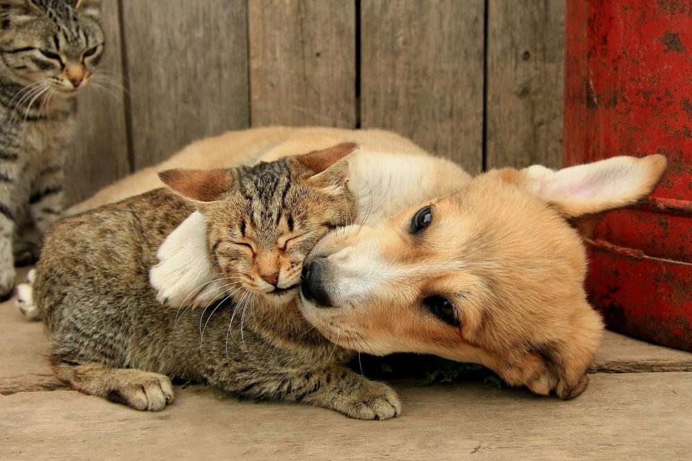 Как кошка с собакой, говорите?