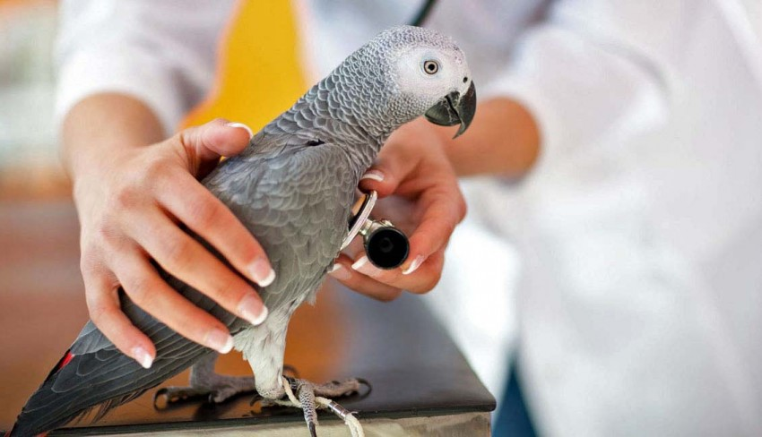 катозал инструкция по применению для животных