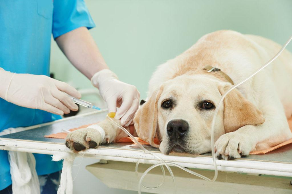 катозал в ветеринарии