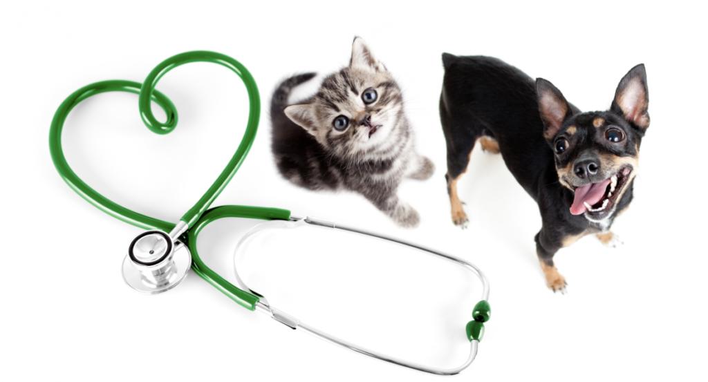 катозал инструкция по применению для кошек