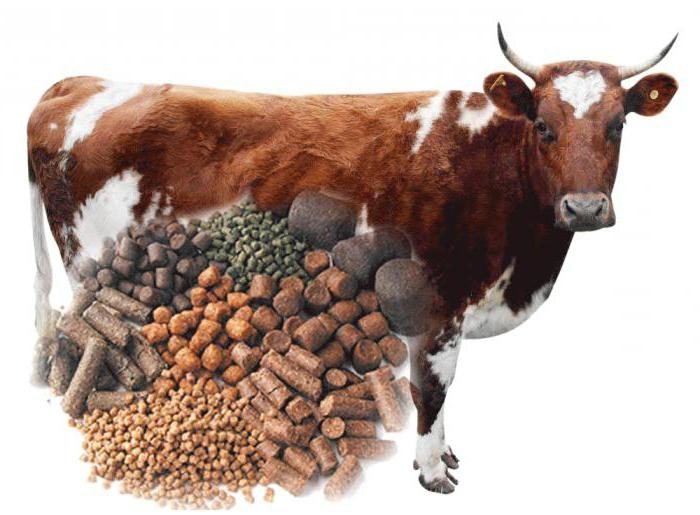 кетоз у коров симптомы и лечение