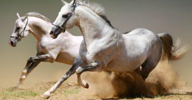 клички для лошадей