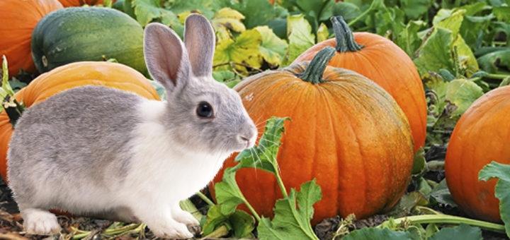 давать кроликам кабачки и тыкву