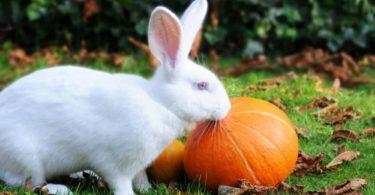 можно ли кроликам тыкву