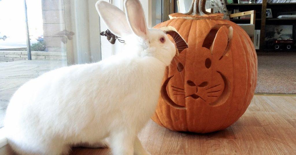 можно ли кроликам давать тыкву