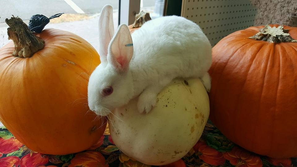 едят ли кролики тыкву