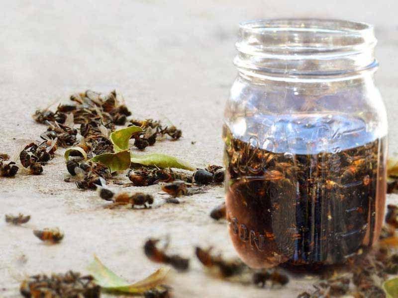 пчелиный подмор настойка применение