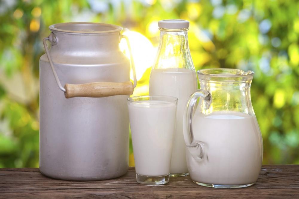 горькое молоко у коровы причины