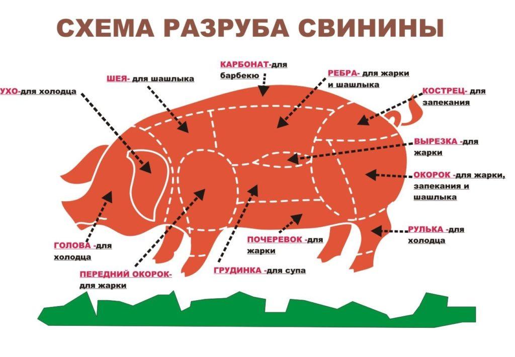 почеревок свиньи на схеме
