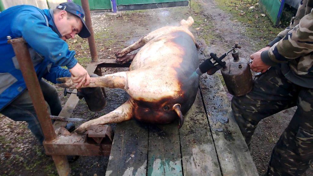 разделать свинью в домашних условиях видео