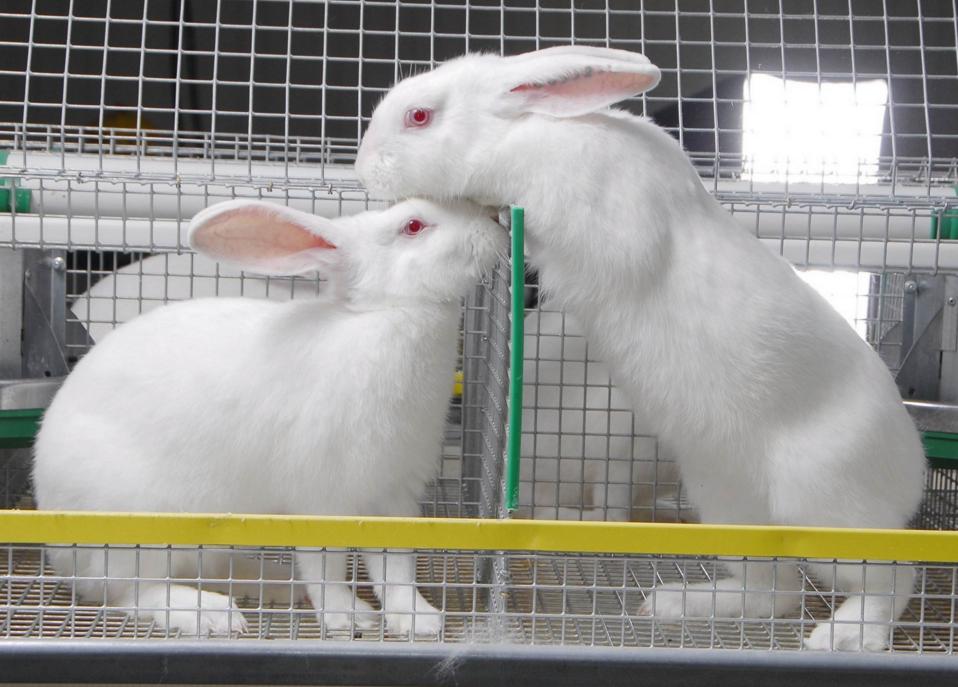 Разведение кроликов как бизнес в 2018 году