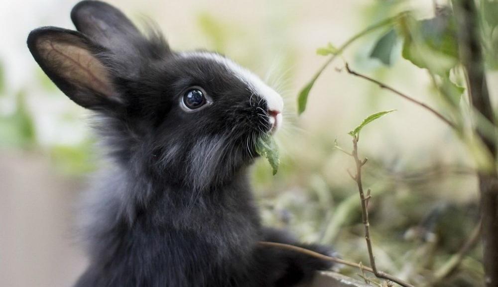 рентабельность разведения кроликов