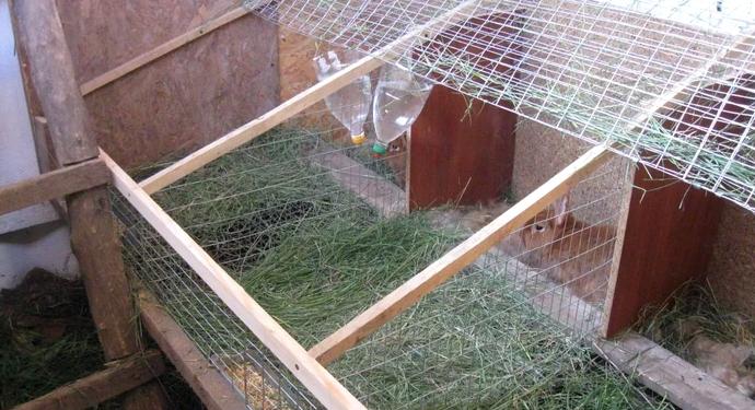 кролики разведение выращивание кормление
