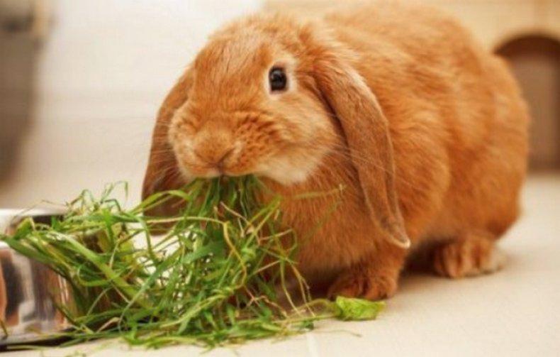 выращивание кроликов на мясо