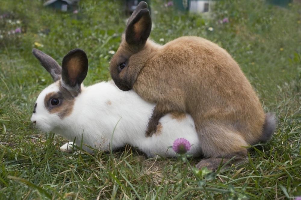 кролиководство в домашних условиях видео