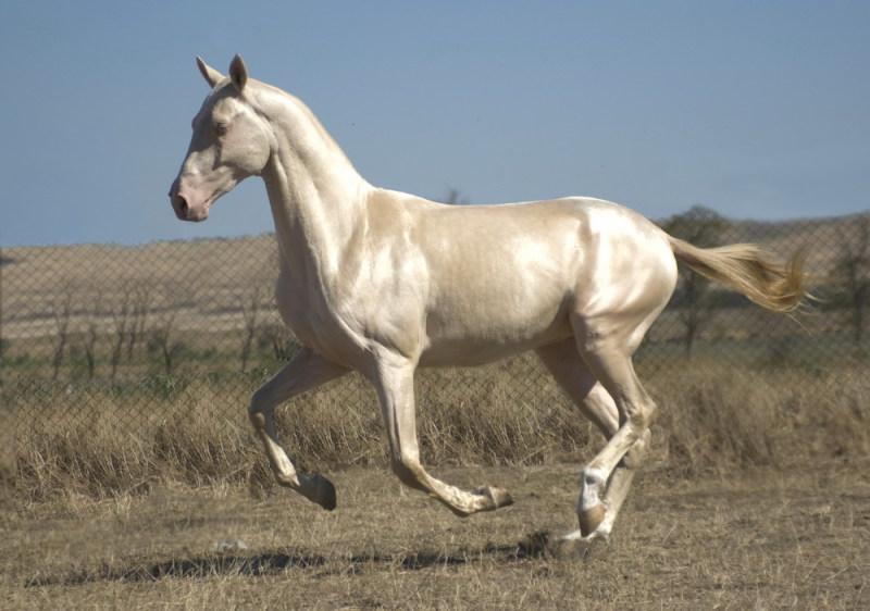 самые лучшие лошади в мире