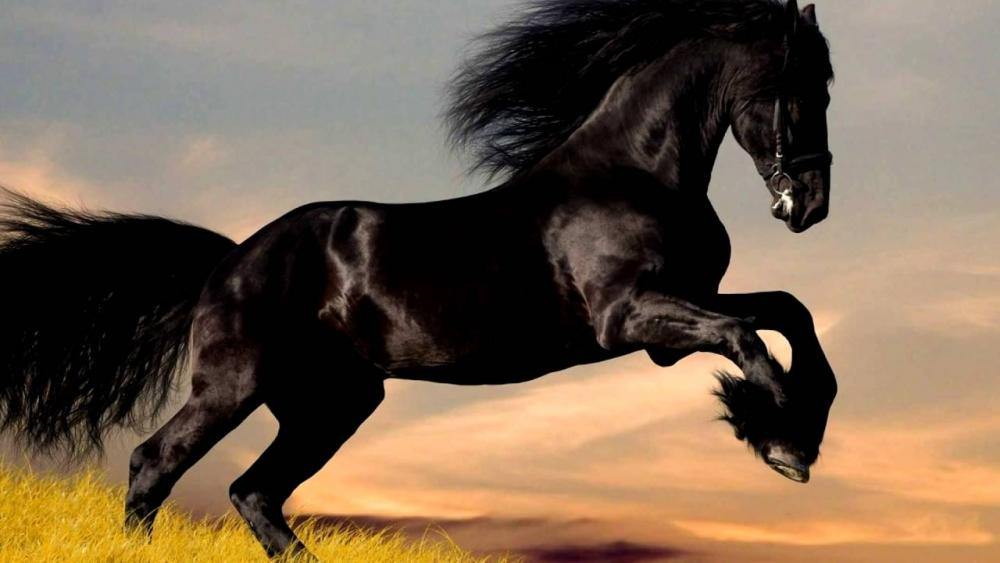 Топ 10 самых дорогих пород лошадей