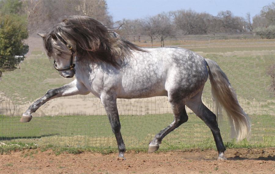 самый большой конь
