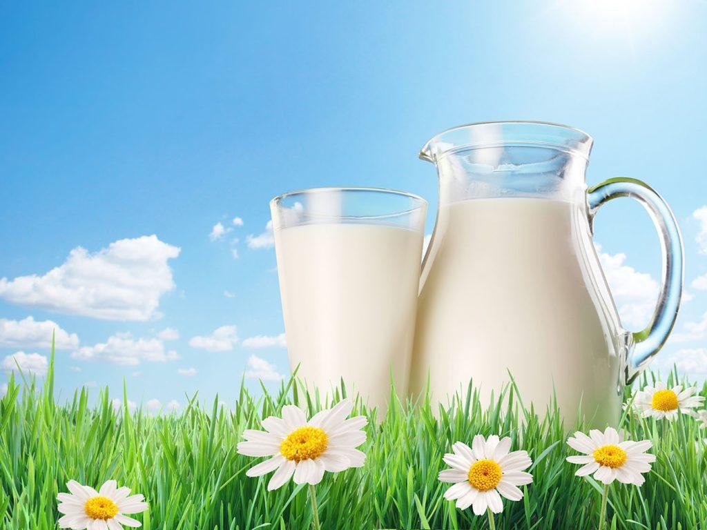 средний удой коровы в сутки