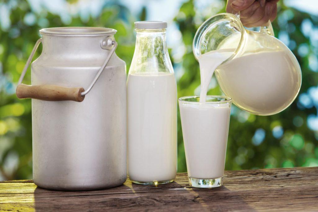 сколько молока дает корова в день