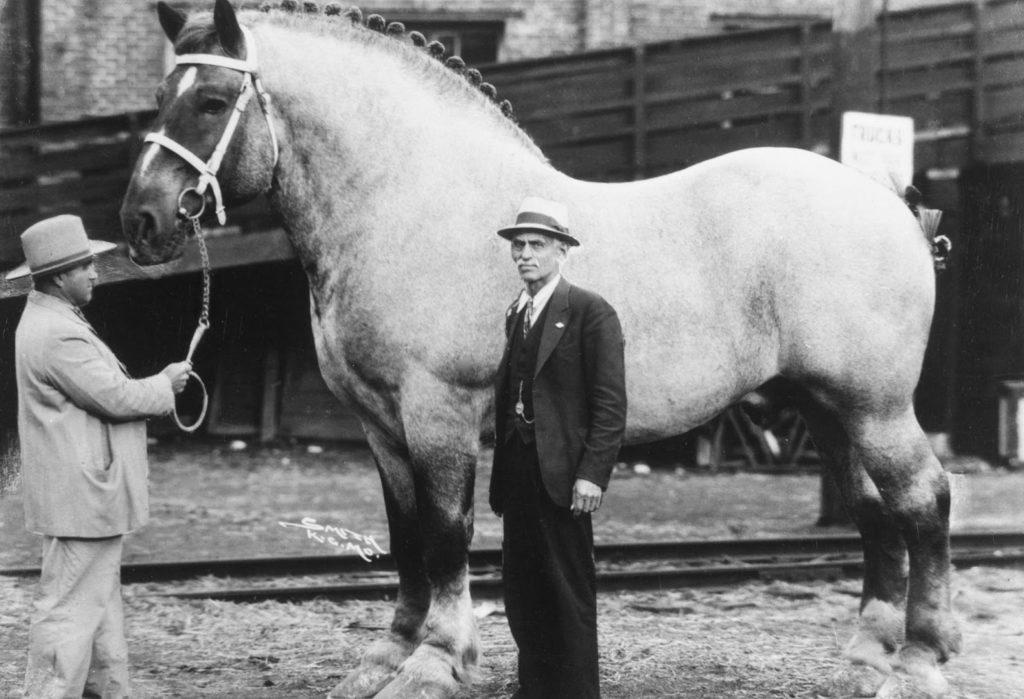 сколько весит пони