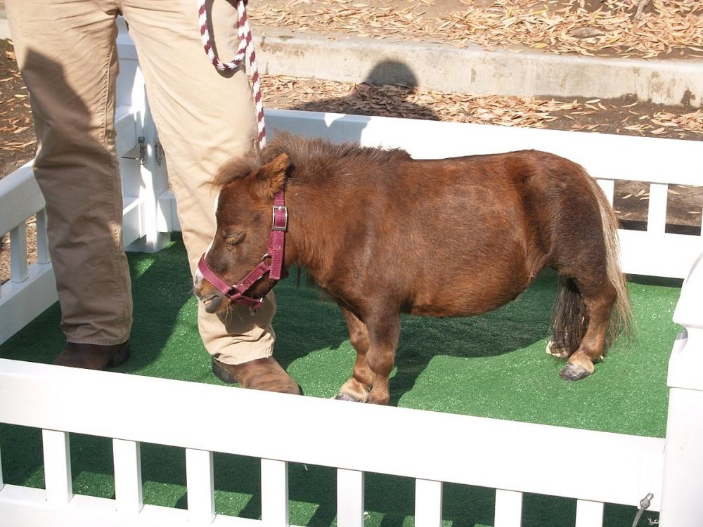 сколько весит конь