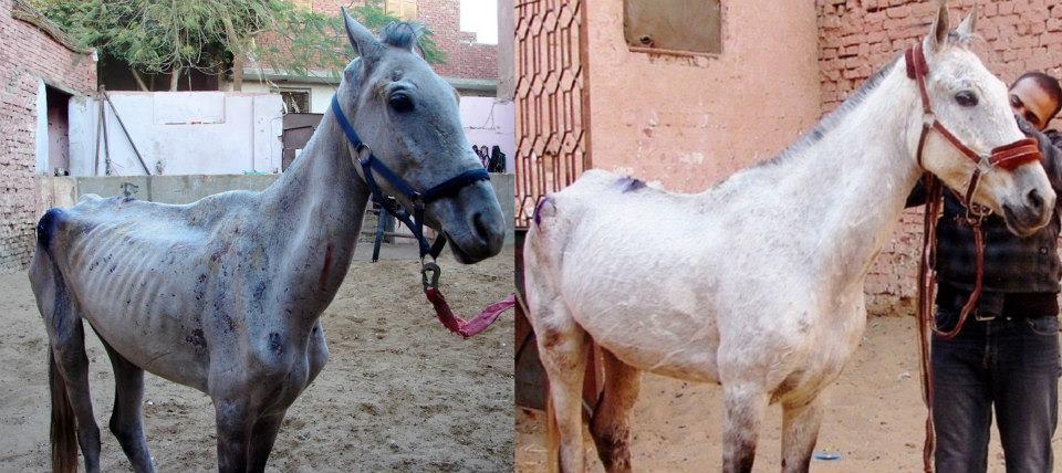 сколько весит лошадь