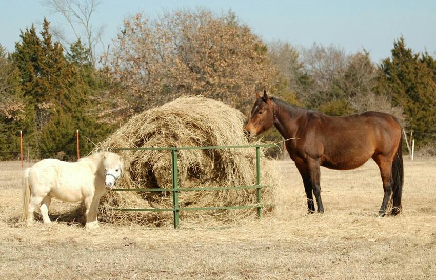 содержание лошади в домашних условиях для новичка