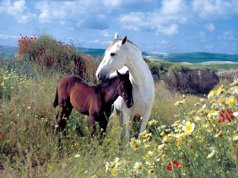 ухаживать за лошадью