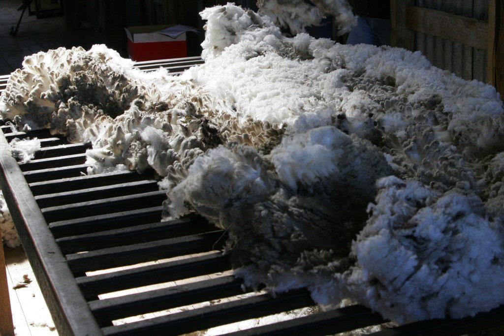 обработать овечью шкуру в домашних условиях