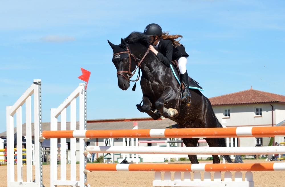 картинки : Лошадь, Жеребец, виды спорта, Конный спорт, Верховая езда ...