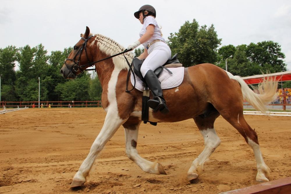 В ЦПКиО определили победителей в выездке лошадей