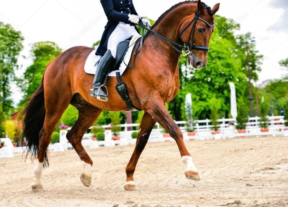 Выездка лошади и всадника - расширенный рысь — Стоковое фото ...