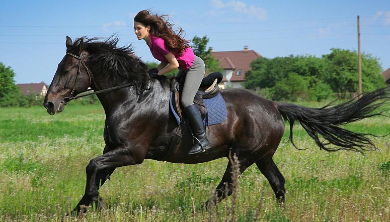 Верховая езда – – Одесса – EMOZZI