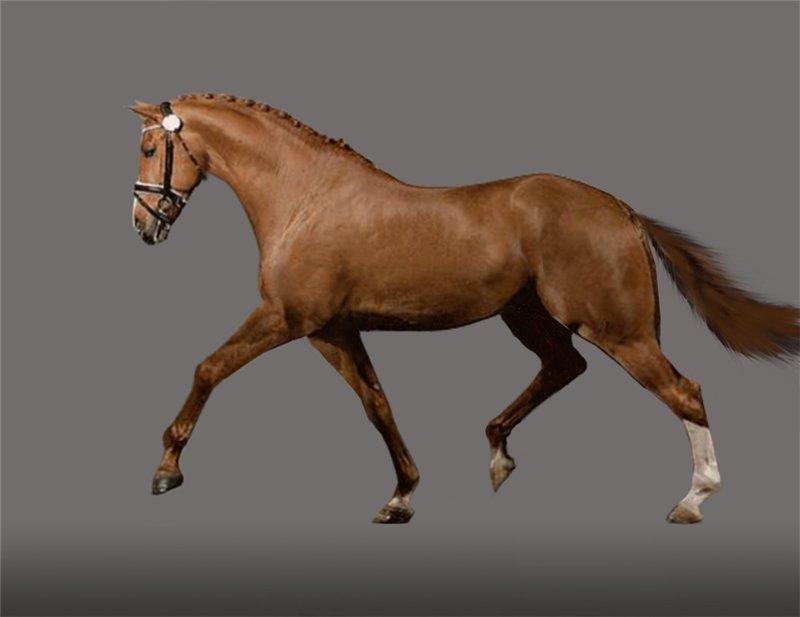 Разбор взаимосвязи экстерьера лошади и стиля ее движений