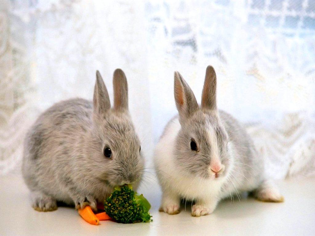 различить кроликов самца от самки видео