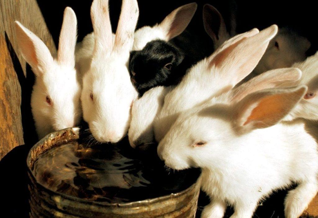поилки для кроликов зимой своими руками