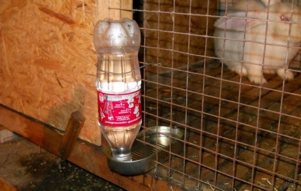 можно ли давать кроликам снег вместо воды