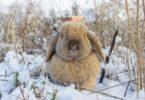 поить кроликов зимой