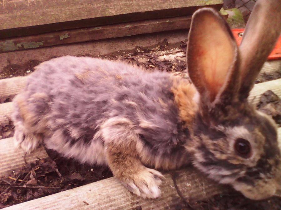 Соликокс — инструкция по применению для кроликов