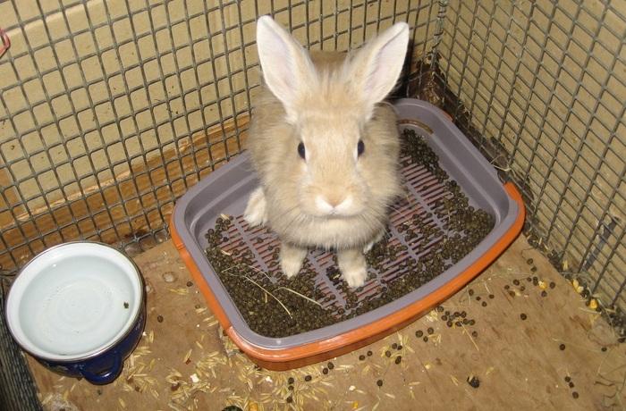 Понос у кроликов: причины и лечение
