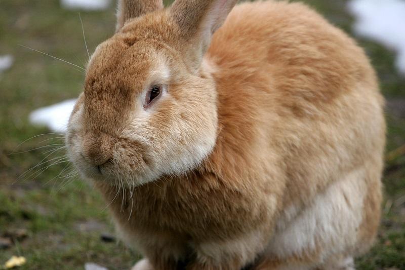 Кролики болезни симптомы. Болезни кроликов: симптомы и их лечение ...